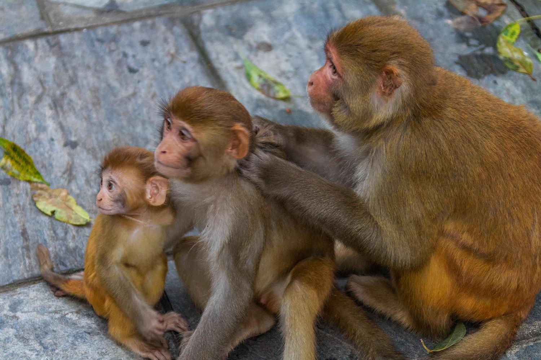 Monkeys break the rules of looking space
