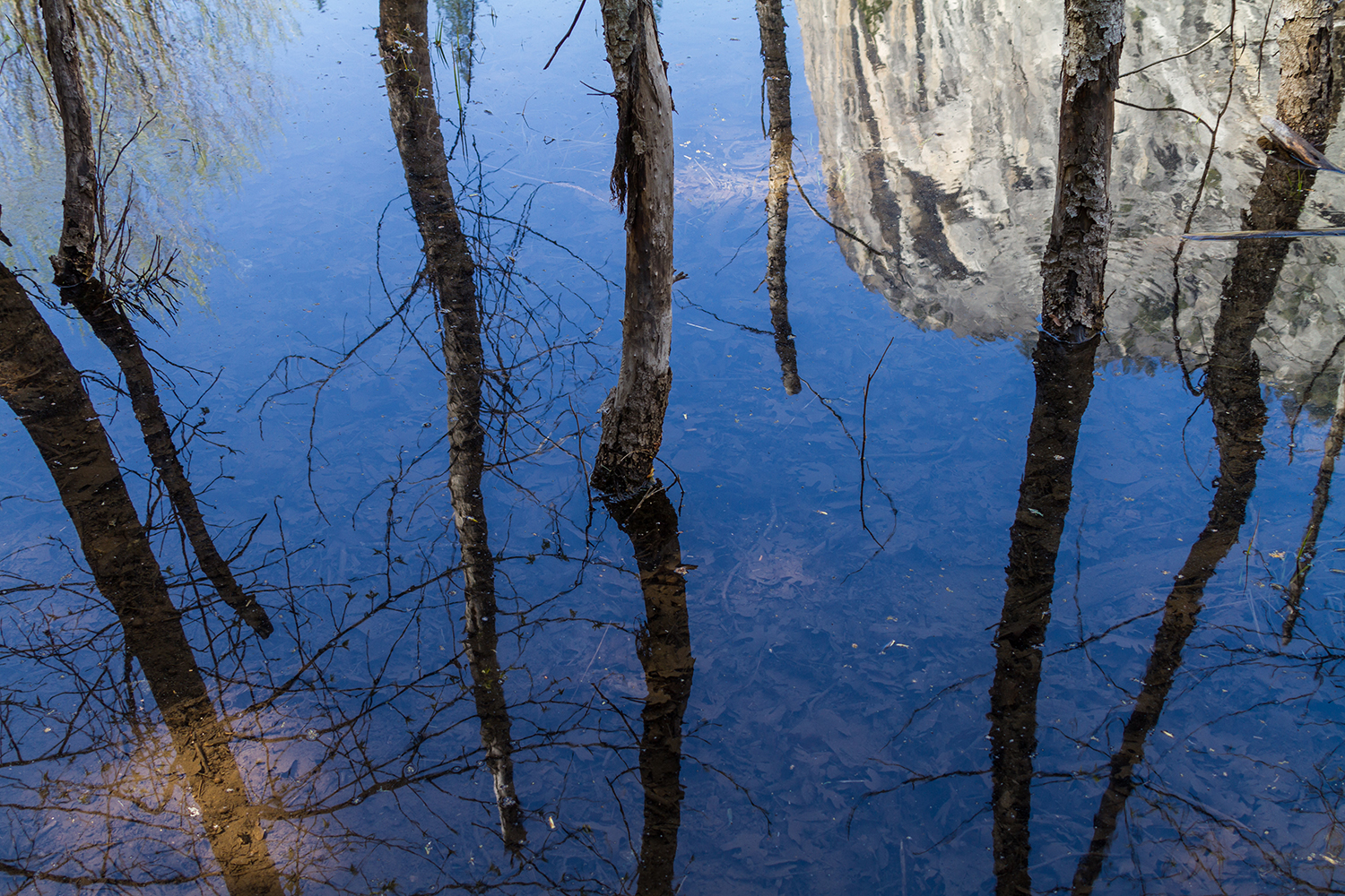 Tree reflection breaks the rules of leading lines