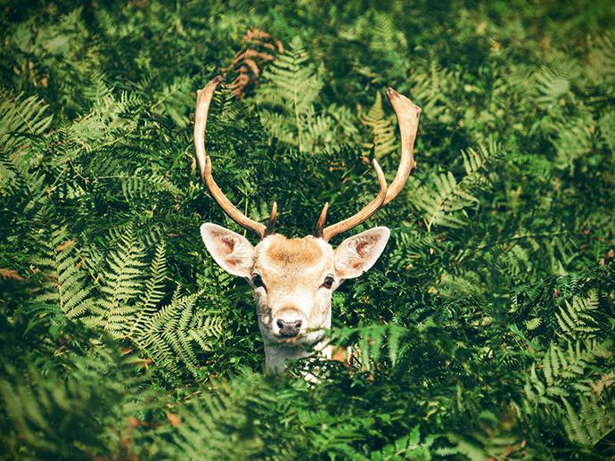 a deer observing a photographer